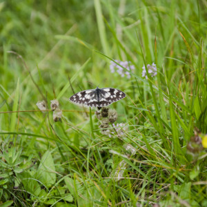 Initial Naturopathic Consultation – Gift Certificate